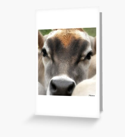 Cow  Eyes Greeting Card