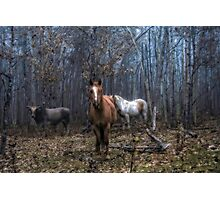 Autumn Livestock Photographic Print