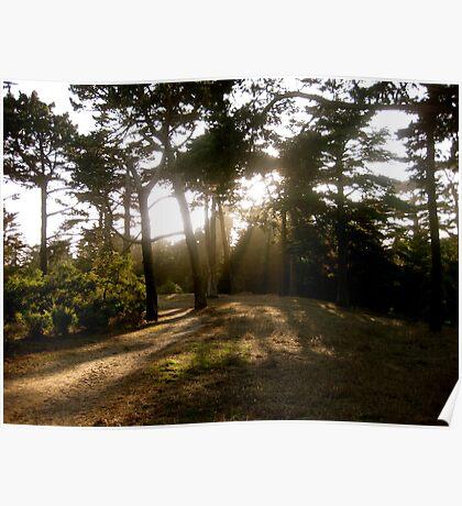 Golden Gate Sunshine  Poster