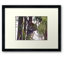 Stop! Thief! Framed Print