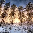Tall and Snowy by Bob Larson