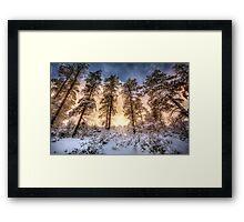 Tall and Snowy Framed Print