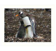 Gentoo Penguin and Chick Art Print