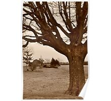 Tree-framed farm scene Poster