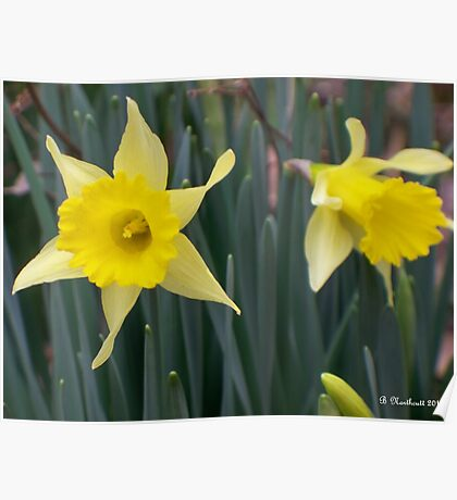 Sign Of Spring - Yellow Daffodils Along Roadside Poster
