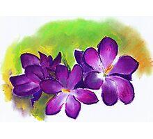 Alison Orr's 'Purple Crocuses' Photographic Print