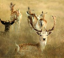 ~ Oh Deer! ~ by Lynda Heins