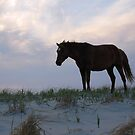 America Is Beautiful-Assateague Island Wild Horse, Maryland by Sandy O'Toole
