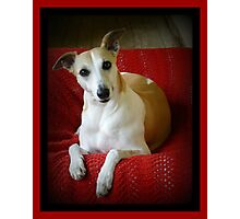 Expressive And Alert.......Chloe. Photographic Print