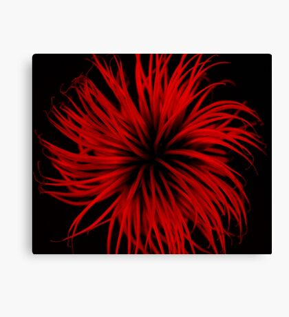Explosions in nature  Canvas Print