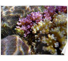 Coral on Tanna Island, Vanuatu Poster