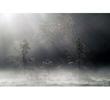 12.9.2015: Pine Trees, Autumn Morning Photographic Print