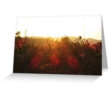 Beautiful sunset over grassland Greeting Card