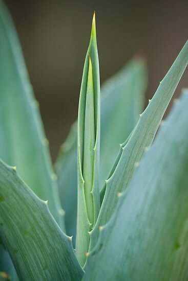 A Needle of Aloe by Sonja Wells