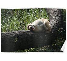 Allow me to sleep Poster