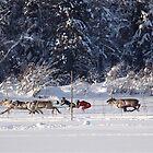 Reindeer Races by Katariina Lonnakko