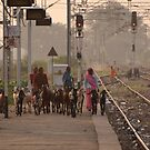 Goat herders, Bharatpur Railway Station, Rajasthan by Christopher Cullen