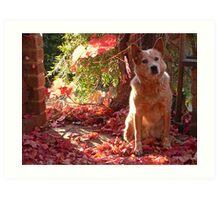 australian cattle dog - red heeler - autumn sunset Art Print