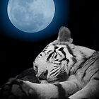 Tiger Moon by Webitect