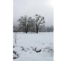 frosted oak trees Photographic Print