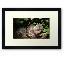 Cute Squirrel Photo and Cell Phone Case Framed Print