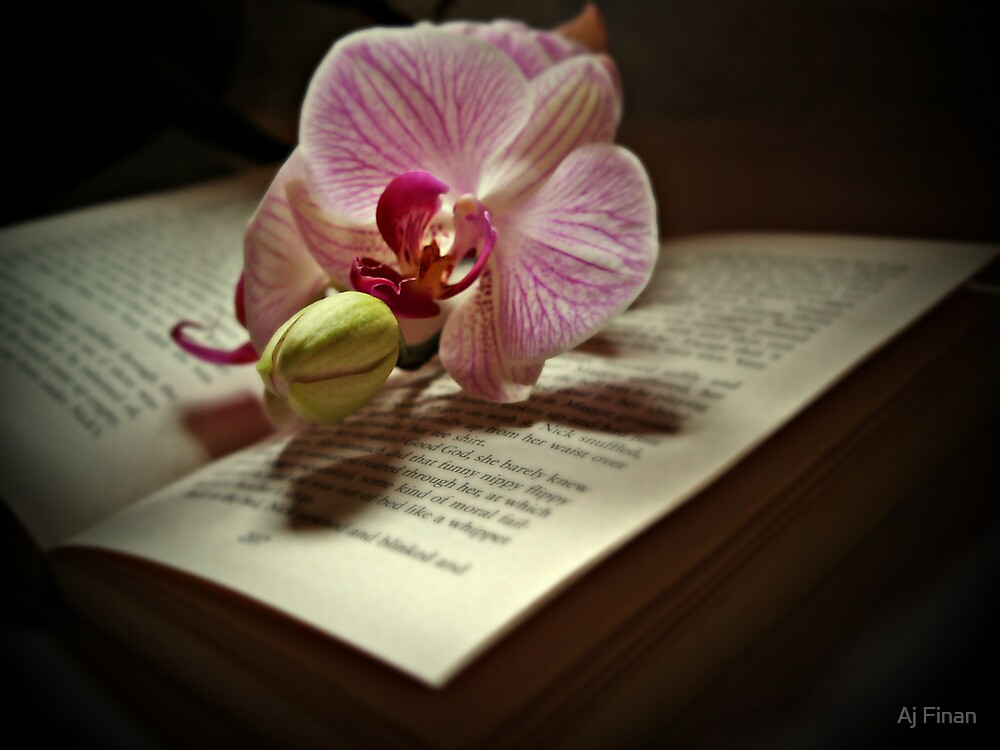 A Story Of An Orchid by Aj Finan