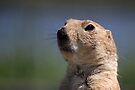 Portrait of a Prairie Dog by Jo Nijenhuis