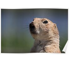 Portrait of a Prairie Dog Poster