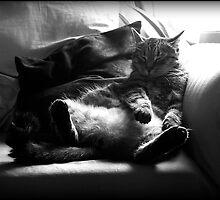 Nap Time by Melanie Moor