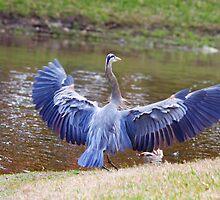 Heron Bank Landing by Deborah  Benoit