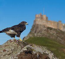 Bird of Prey by Brian Avery
