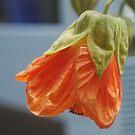 Orange Blossom by Susie Raine