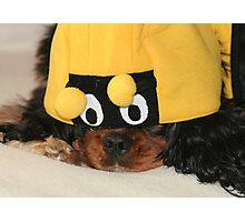 The Unhappy Bumble Bee Photographic Print