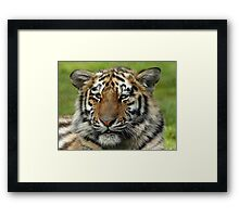 Young Tiger Framed Print