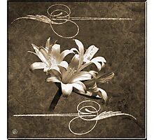 Art Nouveau Naked Ladies Photographic Print