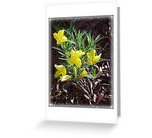Evening Primrose Greeting Card