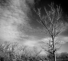 Tree and clouds by Joeblack