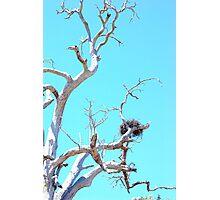 habitat tree Photographic Print