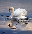 Swan on Ice by Darren Burroughs