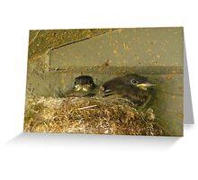 Bird - Make my day Greeting Card