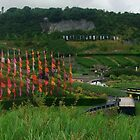 Flags in the breeze by MichelleRees