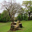 Tree landscape  by AnaGoncalves