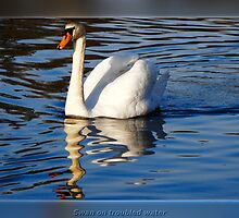 Swan on troubled water by Poete100