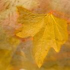 Autumn Leaf by BoB Davis