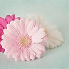 Pastel party by Tracey Hill