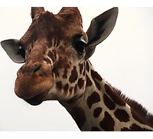 Giraffe Glancing at Me Photographic Print