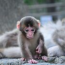 One Very Small Step For Monkey by gottheshot