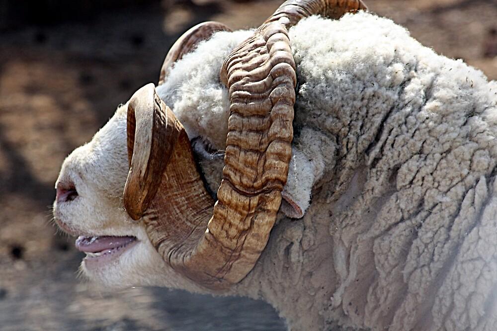 Horned sheep by rasnidreamer