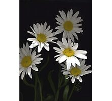 Daisies For You Photographic Print