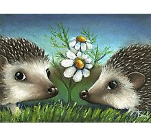 Hedgehogs on a date Photographic Print